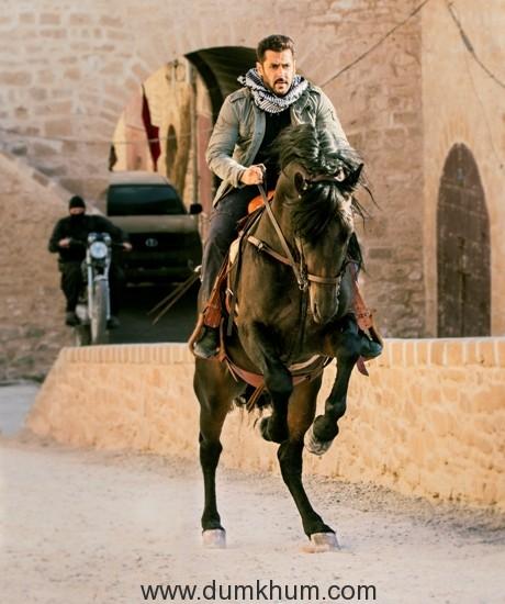 Tiger hunts on a horseback in Morocco!