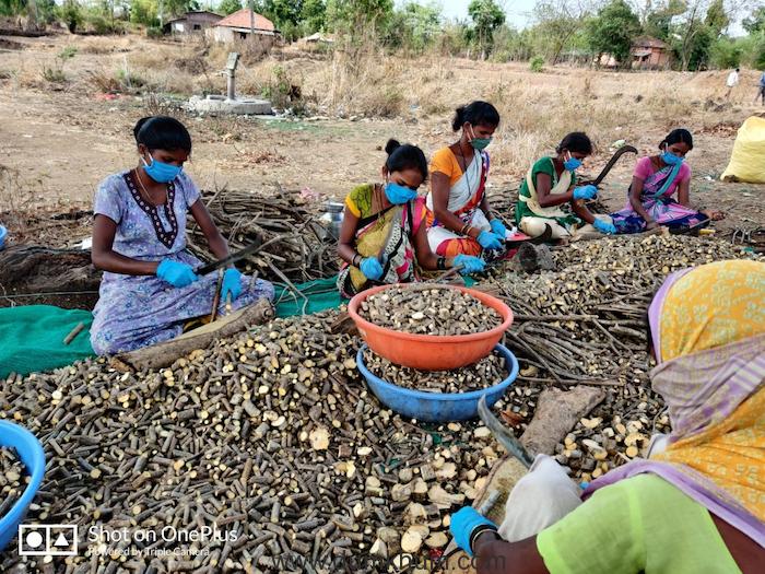 The Story of Shahapur's Katkari Tribe-2